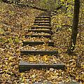 Step Trail In Woods 14 by John Brueske
