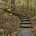 Step Trail In Woods 15 by John Brueske