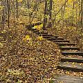 Step Trail In Woods 16 by John Brueske