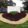 Stephen Circle Gardens 5 by Vladimir Berrio Lemm