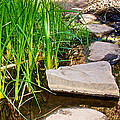 Stepping Stones Across Creek On Lower Palm Canyon Trail In Indian Canyons Near Palm Springs-ca by Ruth Hager