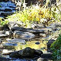 Stepping Stones by Sheri Keith