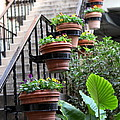 Steps Oh Plants by Sophal Benefield