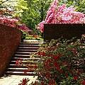 Steps To Azalea Fairyland by Lois Ivancin Tavaf