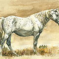 Sterling Wild Stallion Of Sand Wash Basin by Linda L Martin