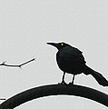Stick-grackle And Bar Thats All by Tom Janca