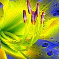 Stigma - Photopower 1157 by Pamela Critchlow