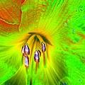 Stigma - Photopower 1188 by Pamela Critchlow