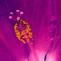 Stigma - Photopower 1227 by Pamela Critchlow