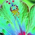 Stigma - Photopower 1278 by Pamela Critchlow