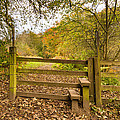 Stile In Plessey Woods by David Head