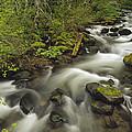 Still Creek Mt Hoodoregon by Gerry Ellis