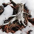 Still In Snow by Ric Bascobert