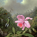 Still Life With An Orchid And A Pair Of Hummingbirds by Martin Johnson Heade