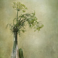 Still Life With Dill And A Cucumber by Priska Wettstein