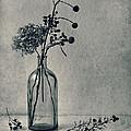 Still Life With Dry Flowers by Dimitar Lazarov - Dim