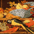 Still Life With Fruit And Macaws, 1622 by Balthasar van der Ast
