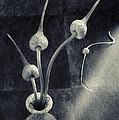 Still Life With  Garlic by Sviatlana Kandybovich