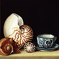 Still Life With Nautilus by Jenny Barron