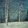 Still Winter by Priska Wettstein