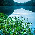 Stillness On Schreeder Pond by JG Coleman