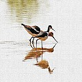 Stilt And Avocet Eat Together by Tom Janca