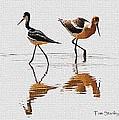 Stilt And Avocet Share The Pond by Tom Janca
