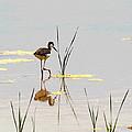 Stilt Chick Exploring Its New World by Tom Janca