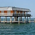 Stilt House With Cormorants by Bradford Martin