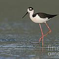 Stilt In Duckweed by Bryan Keil
