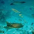 Stingray And Fish by D Hackett