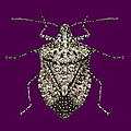 Stink Bug Bedazzled by R  Allen Swezey