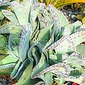 Stippled Cactus by Deborah Smolinske