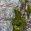 Stone And Moss by Ashley M Conger