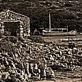 Roman Port Of Sa Nitja In Minorca - Stone And Sea Sephia Version by Pedro Cardona Llambias