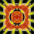 Stone Circle Sunrise by Neil Finnemore