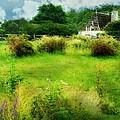 Stone Crop Garden by Diana Angstadt