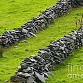 Stone Fences In Ireland by John Shaw