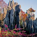 Stone Forest by Dennis Cox