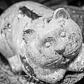 Stone Kitty by Paul Bartoszek