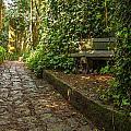 Stone Path Through A Forest by Jess Kraft