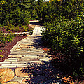 Stone Pathway by Tom Gari Gallery-Three-Photography