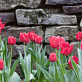 Stoned Tulips by Robert Camp