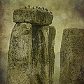 Stonehenge Birds 6 by Clare Bambers
