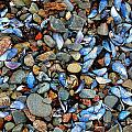 Stones And Seashells by Jim Southwell