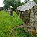 Stones At Avebury by Denise Mazzocco