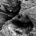 Stonewood Canyon - Bw - Wonderwood Collection - Olympic Peninsula Wa by Craig Dykstra