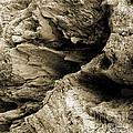 Stonewood Canyon - Square - Sepia Tone - Wonderwood Collection - Olympic Peninsula Wa  by Craig Dykstra