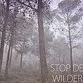 Stop Destroying Forest Wilderness Area by Guido Montanes Castillo
