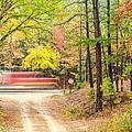 Stop - Beaver's Bend State Park - Highway 259 Broken Bow Oklahoma by Silvio Ligutti